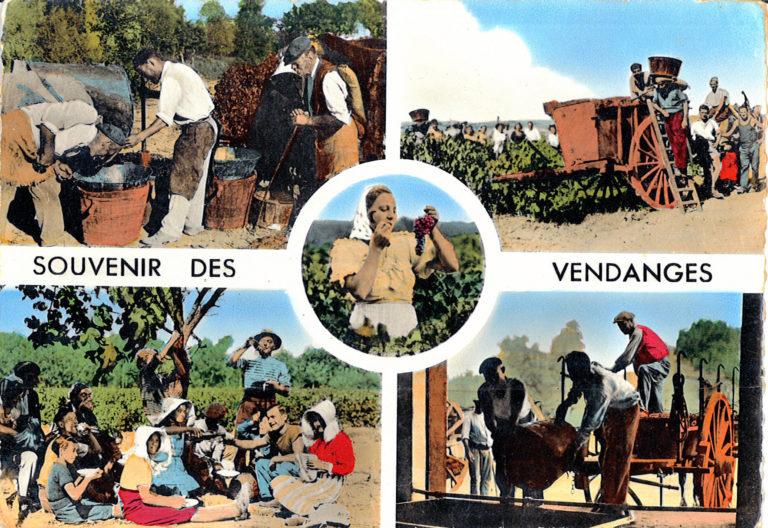 Carte postale vendanges