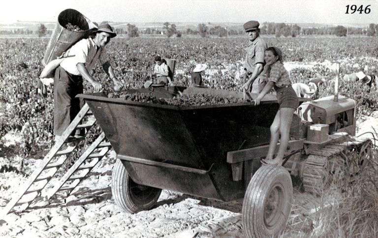 Vendanges 1946